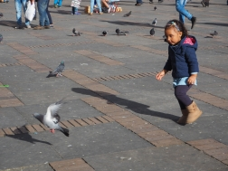 And chasing the pigeons