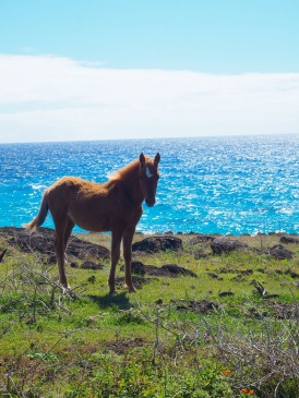 One of the many wild horses