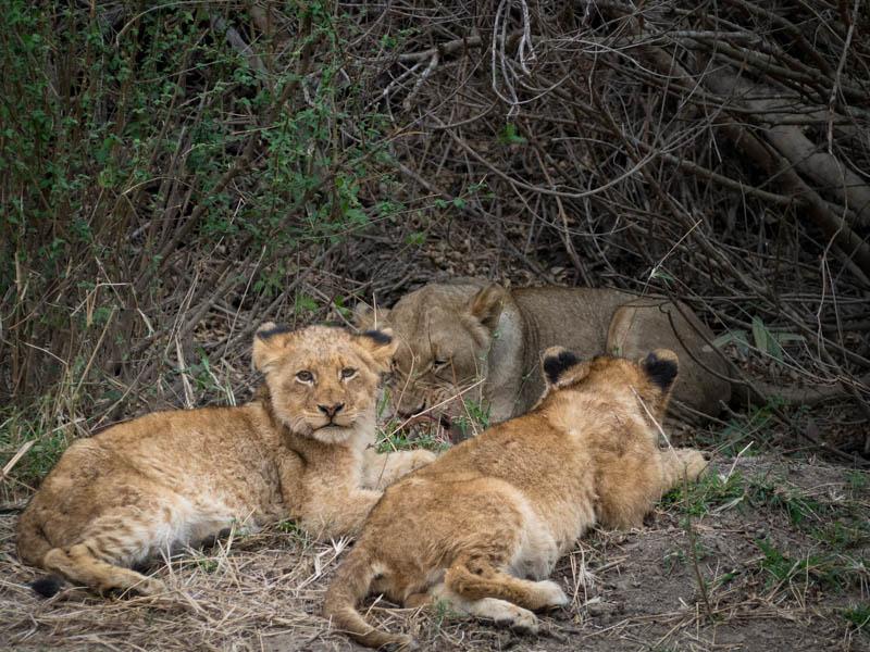 Safari: South Africa & VictoriaFalls