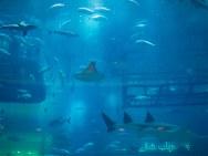 The acquarium at the mall