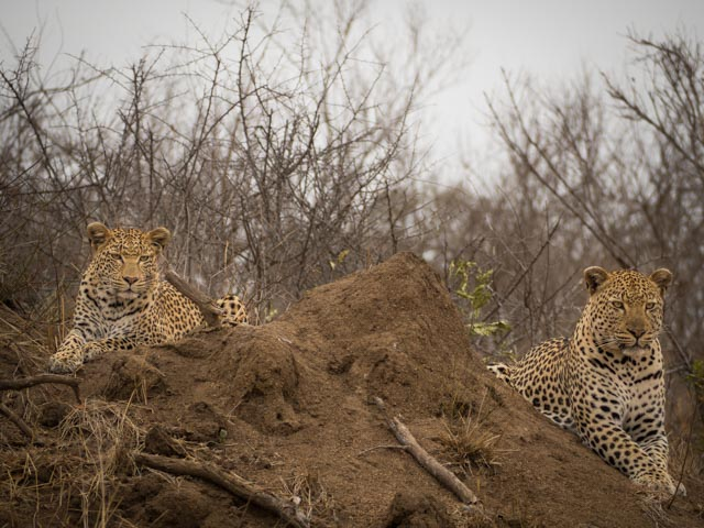 Africa edited_170924_P9241062