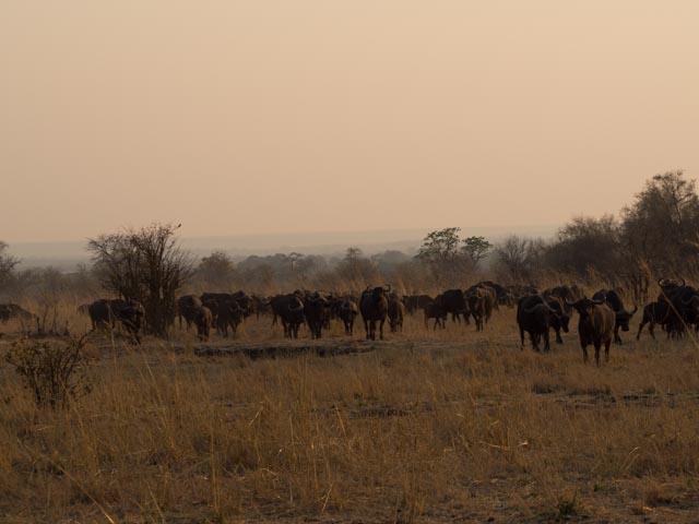 Africa_170921_P9211998