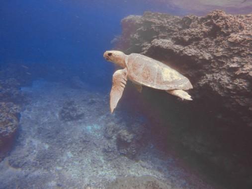 FijiScubaSnorkel_171125_GOPR2565